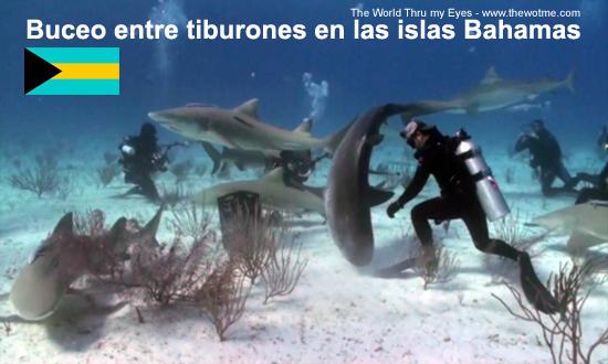 buceo entre tiburones en las islas bahamas - buceo tiburones bahamas - Buceo entre tiburones en las islas Bahamas
