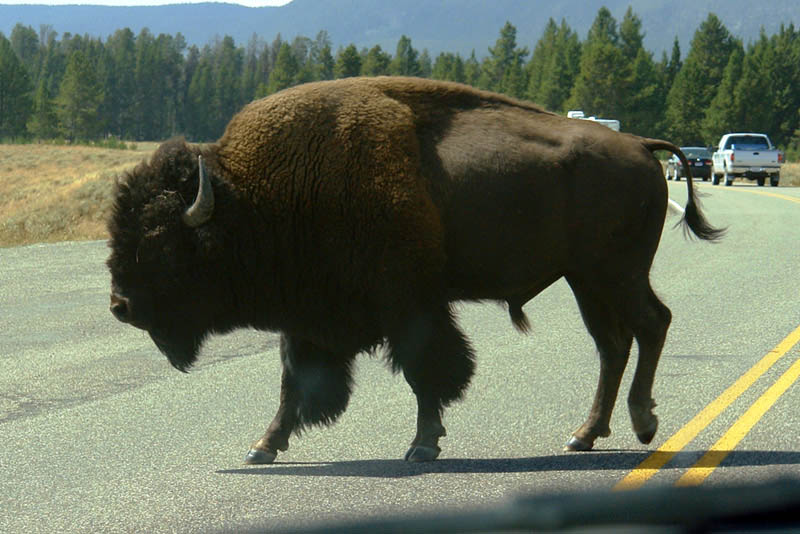 parque nacional yellowstone - yellowstone - Parque Nacional Yellowstone, cómo visitarlo en dos días