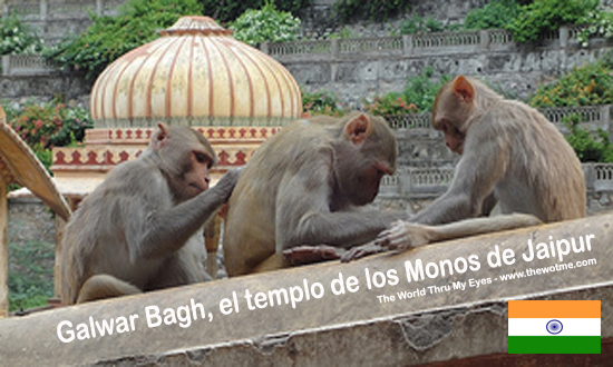 Galwar Bagh, el templo de los Monos de Jaipur thewotme@TV - vasa2 - thewotme@TV