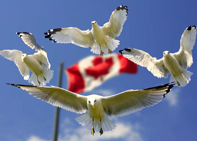 canadá - portada viajar a canada 800x573 - Guía de viajes y visa para Canadá