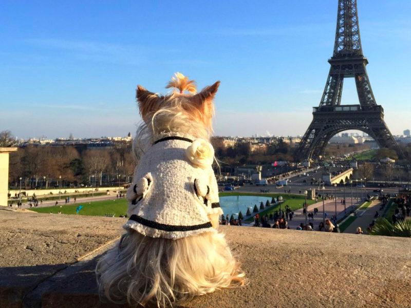 viajar a paris con perro - viajar a paris con perro hotel de nell lujo mascotas francia 800x600 - Viajar a Paris con perro