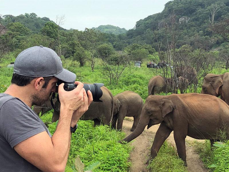 ver elefantes salvajes en sri lanka - thewotme minneriya elefantes salvajes sri lanka 800x600 - Ver elefantes salvajes en Sri Lanka