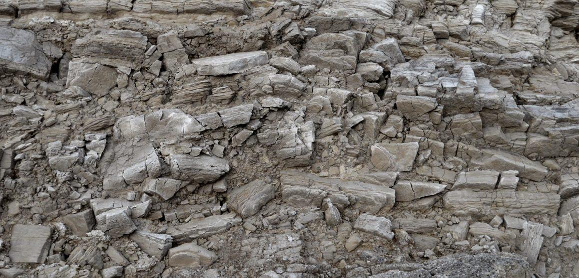 costa jurásica - Fossil forest a 1160x558 - Costa Jurásica de Inglaterra, un viaje de millones de años