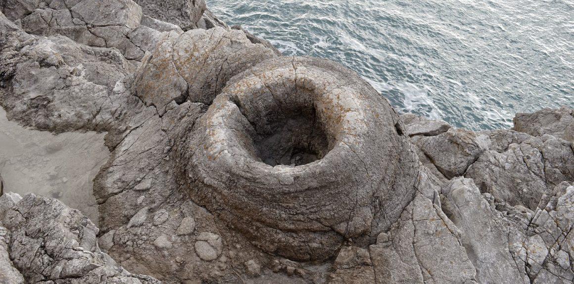 costa jurásica - Fossil forest b 1160x575 - Costa Jurásica de Inglaterra, un viaje de millones de años